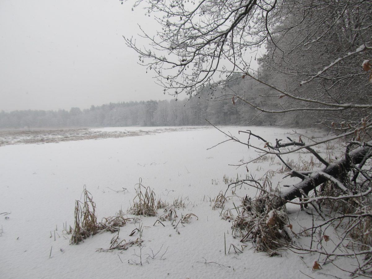 Заказник зимой